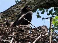 eaglet doing the sun pose