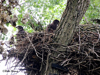 The juvies on the nest